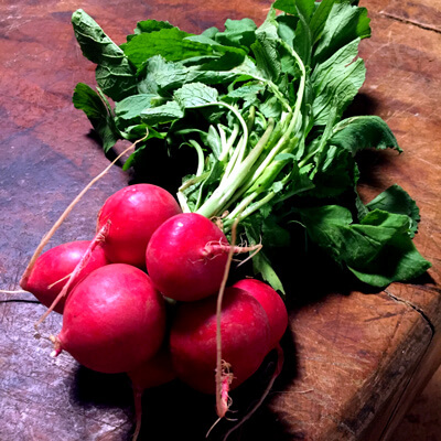 Organic red radishes with deep green tops.